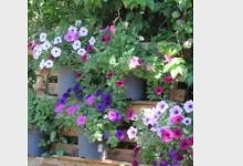 Letní květináče