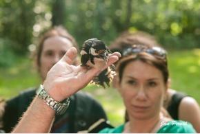 Za ptačími hlasy Satalické obory a Vinořského parku, 2. června 2015