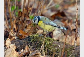 Vítání ptačího zpěvu